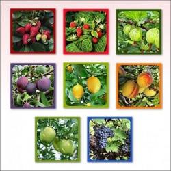 Прихватка Ягоды-фрукты (Фото) 8 диз (упак. 8шт)